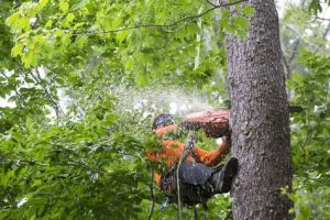 Truth About Tree Services