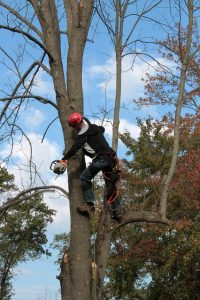 Best Ways to Find a Tree Service Company